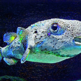 Puffer Fish by Jane Schnetlage