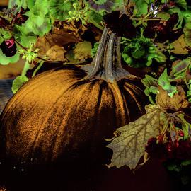 Donna Fonseca Newton - Pumpkin