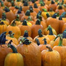 Joseph Skompski - Pumpkin Patch