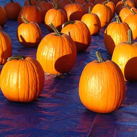 Pumpkins Blues Landscape by Steve Karol
