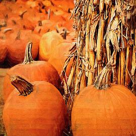 Pumpkins by Jill Lang