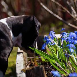 Tamara Sushko - puppy and flowers