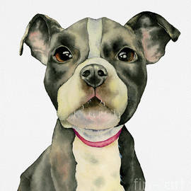 NamiBear - Puppy Eyes