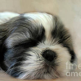 Darren Fisher - Puppy Love