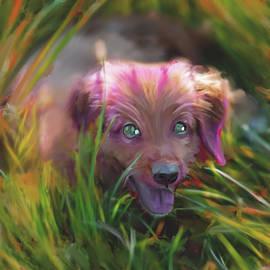 Armin Sabanovic - Puppy Mouse