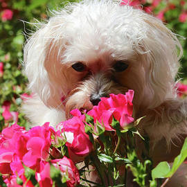 Carol Groenen - Puppy with Roses