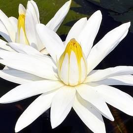 Deepa Sahoo - Pure Beauty