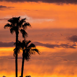 Purple And Orange Sky by Cathy Franklin