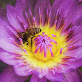 Teresa Wilson - Purple and Yellow Lotus With a Bee Textured
