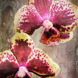 Purple and Yellow Orchid 3723-3735 art by Rudy Umans