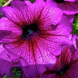 Darryl Treon - Purple Beauty