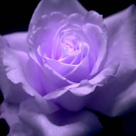 Jennifer Stackpole - Purple Beauty