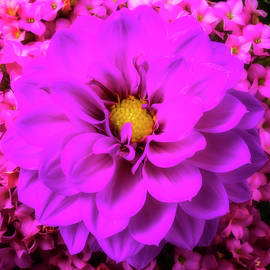 Purple Dahlia And Kalanchoe Flowers - Garry Gay