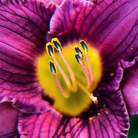 Purple Daylily Macro 1 by Mary Ann Artz