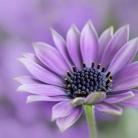 Silke Tuexen - Purple Dream
