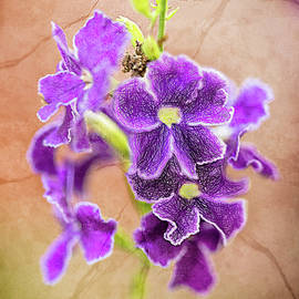 Louloua Asgaraly - Purple Flower