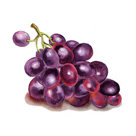 Irina Sztukowski - Purple Grape Watercolor