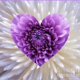 Joan-Violet Stretch - Purple Heart
