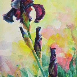 Steve Henderson - Purple Iris
