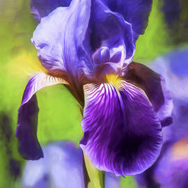 Purple Iris by Teresa Wilson