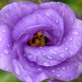 Purple Rain by Joy Watson