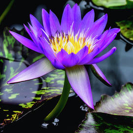 Usha Peddamatham - Purple mood.
