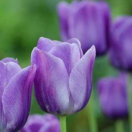 Nick Boren - Purple Ones