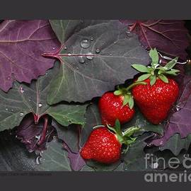 Patricia Overmoyer - Purple Orach with Strawberries