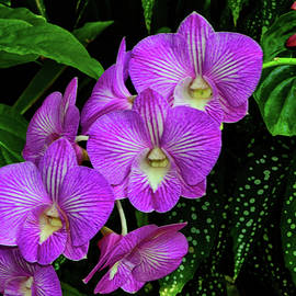 George Bostian - Purple Orchids 008
