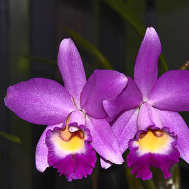 Sally Weigand - Purple Orchids