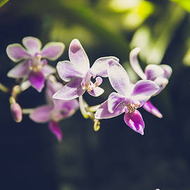 Purple Orchids by Teresa Blanton
