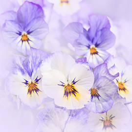 Purple Pansies by Elena Elisseeva