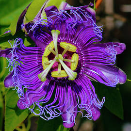 Robert Wilder Jr - Purple Passion