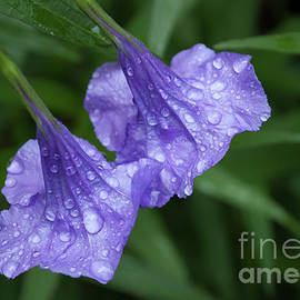 Carol Lloyd - Purple Rain