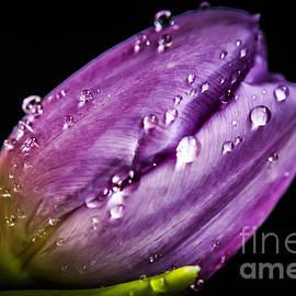Claudia M Photography - Purple rain