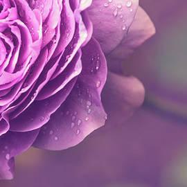 Purple senses by Flo Photography