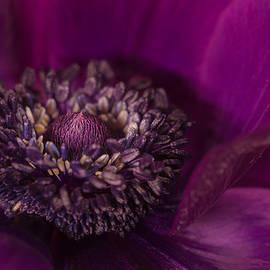 Silke Tuexen - Purple Spring