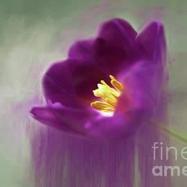 Purple Tulip Art by Darren Fisher