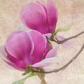 Purple Tulip Magnolia by Heiko Koehrer-Wagner