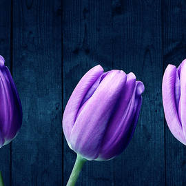 Purple Tulips On Blue Wood by Johanna Hurmerinta