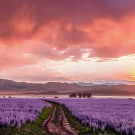 Darlene Smith - Purple Twilight