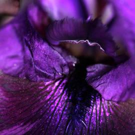 Purple Velvet by Debbie Oppermann