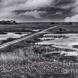 Tom Gari Gallery-Three-Photography - Purple Wildflowers