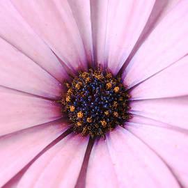 Purpleallaround by Janice Bajek