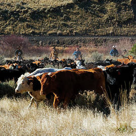 Pushing the Herd by Mike Dawson