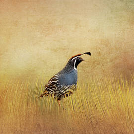 Terry Davis - Quail in the Grass