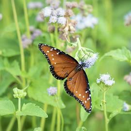 Saija Lehtonen - Queen of the Butterflies