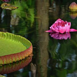 Ben Prepelka - Queen of the Water Lilies