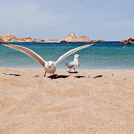 Queens of blue land in Pregonda beach - Minorca island by Pedro Cardona Llambias