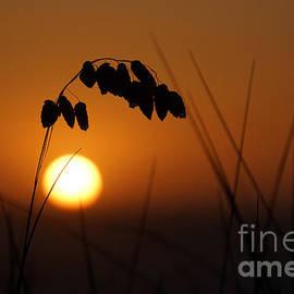 Quiet sunset by Inge Riis McDonald